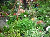 7  藍山園藝:961007 藍山園藝--科羅莎颱風DSCN9376