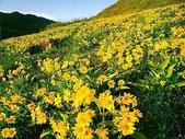 5-1  台灣的自然美景--網路圖片:秋景  09