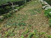4-3  雪霸原生植物繁殖培育:104-0627 雪霸--武陵植栽繁殖 (5).JPG