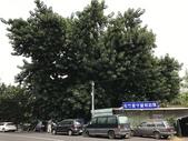 台中市樹木保護委員會審查樹保計畫:106-0818 樹木保護計畫會勘-松竹路橡膠樹 (4).jpg