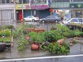 7  藍山園藝:102-0713 蘇力颱風 (3).jpg