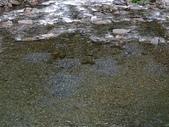 4-5  武陵的秋天:100-1107 櫻花鉤吻鮭繁殖季 (5).jp