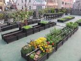 1-4  屋頂菜園 -- 竹南營盤社區之社區營造屋頂菜園:103-1030 屋頂菜園--營盤社區營造 (5).jpg