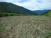 4-5  武陵--雪霸國家公園武陵遊憩區:武陵整地撒種工程--植樹  DSCN4478