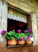5-5  花:窗 101-0728-10.jpg