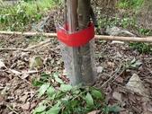 4-4  雪見 - 環境教育及工作假期:104-0430-2 泰安國小環境教育--種樹 (58).jpg