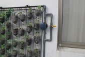 1-4  屋頂菜園 -- 竹南營盤社區之社區營造屋頂菜園:103-1022 屋頂菜園--營盤社區營造 (219).jpg