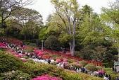 5-4  美麗的花園:日本杜鵑花園  028.jpg