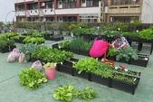 1-4  屋頂菜園 -- 竹南營盤社區之社區營造屋頂菜園:103-1127  營盤社區屋頂菜園--審查及收成 (52).jpg