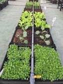 1-4  屋頂菜園 -- 竹南營盤社區之社區營造屋頂菜園:103-1030 屋頂菜園--營盤社區營造 (30).jpg