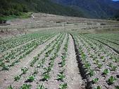 4-5  武陵--雪霸國家公園武陵遊憩區:武陵整地撒種工程--施工前  DSCN44