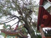 大樹工程-老樹移植-台中水湳列管老樹移植:105-0930  梅姬颱風後 (8).jpg
