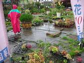 7  藍山園藝:950528藍山園藝--淹大水  DSCN0637