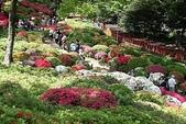 5-4  美麗的花園:日本杜鵑花園  029.jpg