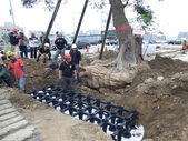 擴大樹穴結構模組--台中列管老樹移植施工實例:105-1206 台中水湳列管老樹移植 (214).jpg