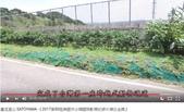 生態:通霄一號橋---台灣第一座跨越式動物通道 (7).JPG