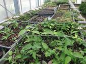4-3  雪霸原生植物繁殖培育:104-0627 雪霸-青剛櫟-原生植栽繁殖 (1).JPG