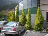 4-5  武陵的植物:香冠柏--武陵 DSCN1516.JPG