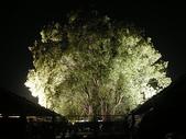 5-4  美麗的花園:菁芳園休閒農場 夜景 990224-03.JP