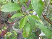 9-5  園藝技術 -- 施肥:104-0227-2  肥料試驗-八寸盆100克 (3).jpg