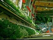綠牆--法國綠牆大師派翠克.布朗克(Patrick Blanc)綠牆作品:140520100445-6264-10.jpg