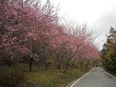 4-5  武陵的春天 --  武陵賞櫻:武陵 100-0212- 317.jpg