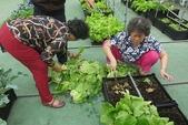 1-4  屋頂菜園 -- 竹南營盤社區之社區營造屋頂菜園:103-1127  營盤社區屋頂菜園--審查及收成 (22).jpg
