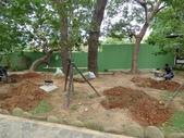 樹木棲地改善--麗池公園土壤透氣工法:104-1223 麗池--透氣工法 (18).jpg