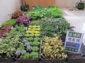 1-11  綠屋頂 -- 盆缽式綠屋頂、屋頂菜園:101-1114-2  盆缽式綠屋頂--研討會