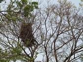 7  藍山園藝:102-0317 藍山野鳥園--麥田 (11).j