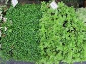 1-11  綠屋頂 -- 盆缽式綠屋頂、屋頂菜園:盆缽式綠屋頂  101-0620 (4).jpg