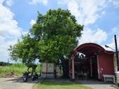 大樹工程-老樹移植-台中水湳列管老樹移植:105-0705  台中水湳老樹移植 (2).jpg