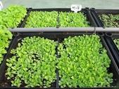 1-4  屋頂菜園 -- 竹南營盤社區之社區營造屋頂菜園:103-1030 屋頂菜園--營盤社區營造 (14).jpg