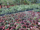 4-3  雪霸原生植物繁殖培育:104-1213 雪霸苗圃 (2).JPG