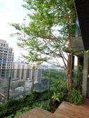 陽台上種大樹 -- 若山:105-1021 綠建築新工法審查--若山 (29).jpg