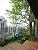 陽台上種大樹 -- 若山:105-1021 綠建築新工法審查--若山 (31).jpg