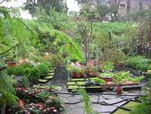 7  藍山園藝:961007 藍山園藝--科羅莎颱風DSCN9373