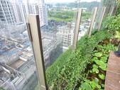 陽台上種大樹 -- 若山:105-1021 綠建築新工法審查--若山 (23).jpg