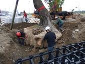擴大樹穴結構模組--台中列管老樹移植施工實例:105-1206 台中水湳列管老樹移植 (332).jpg