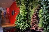 綠牆--法國綠牆大師派翠克.布朗克(Patrick Blanc)綠牆作品:30-7-201014-7-3109.jpg