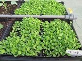 1-4  屋頂菜園 -- 竹南營盤社區之社區營造屋頂菜園:103-1030 屋頂菜園--營盤社區營造 (17).jpg