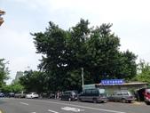 台中市樹木保護委員會審查樹保計畫:106-0818 樹木保護計畫會勘-松竹路橡膠樹 (2).jpg