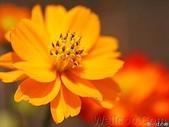 5-5  花:1127.jpg