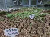 4-3  雪霸原生植物繁殖培育:104-0407  雪霸苗圃維護 (14).JPG
