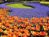 5-4  美麗的花園:美麗花園  003.jpg