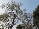 7  藍山園藝:102-0317 藍山野鳥園--麥田 (10).j