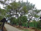 樹木棲地改善--麗池公園土壤透氣工法:104-1223 麗池--透氣工法 (16).jpg