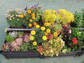1-4  屋頂菜園 -- 竹南營盤社區之社區營造屋頂菜園:103-1030 屋頂菜園--營盤社區營造 (6).jpg