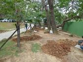 樹木棲地改善--麗池公園土壤透氣工法:104-1223 麗池--透氣工法 (12).jpg