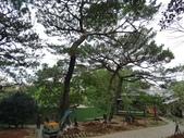 樹木棲地改善--麗池公園土壤透氣工法:104-1223 麗池--透氣工法 (25).jpg